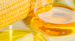 Refining of Vegetable Oils for Biofuels - US